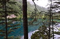 松树后的蓝色湖泊