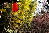 歙县卖花渔村竹林与红灯笼