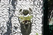 小天使  花盆   纹理墙壁