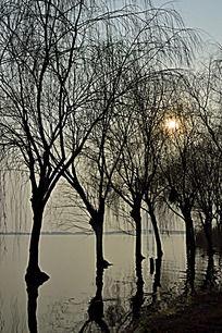 夕阳下固城湖水中的树木