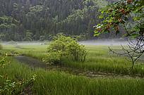 云雾缭绕下的嫩草与溪流