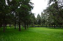 草地上笔直的小树