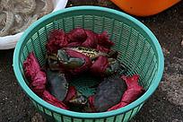 篮子里的大螃蟹