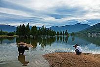 摄影人在水边抓怕水中的耕牛