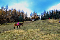兴隆山草地上的骏马