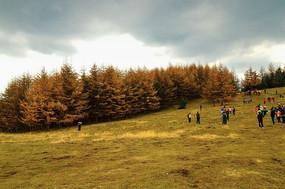 兴隆山空旷草地上的树林
