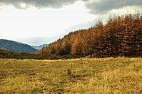 兴隆山上的树林与远山