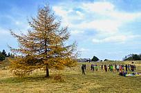 兴隆山上的松树和徒步者