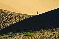 沙漠上的绿草