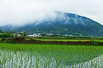 夏季阴雨天的美丽乡村
