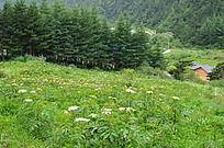 官滩沟山坡上的绿草