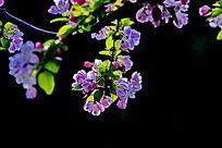浅紫色小花朵