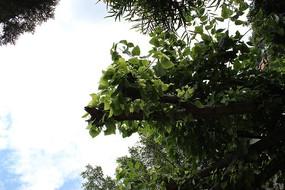 天空  茂密的树木