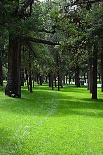 草地上的笔直的小树杆