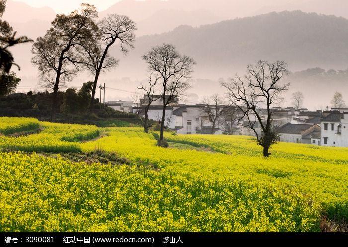 春季清晨的卢村