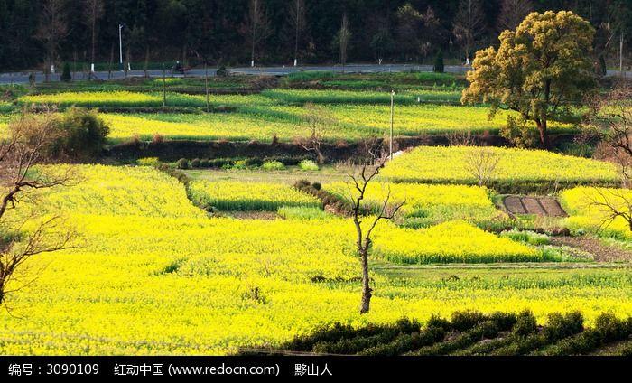 卢村的自然景观