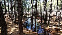云南茶马古道树林里的小溪流
