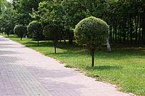 公园里草丛边笔直的小路