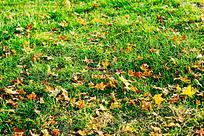 红叶落满青草地