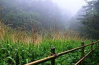 华山雾中的绿草绿树
