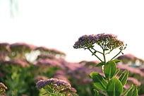 一朵粉紫色花