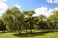 蓝天下草地树木美景