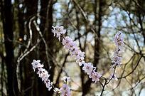 盛开的粉色小花