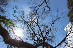 太阳下的枯干树枝