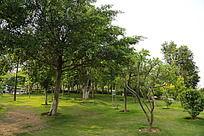 公园里的小树林
