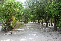 海岛上热带树林