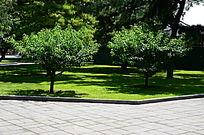路边草地上的小树