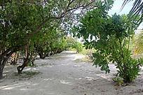 绿树成荫的海滩