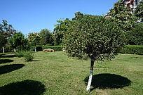 茂密的小树