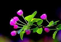 浅粉色小花朵多个