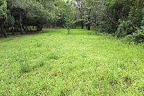 森林公园中绿草地