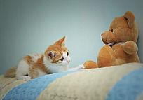 玩耍的小猫