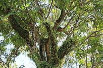 长满绿色青苔的大树