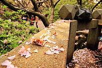 湖南科技大学樱花园樱花亭围栏上阳光下的落樱