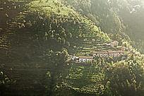 高山梯田茶园