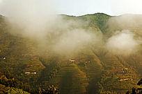 高山梯田云雾