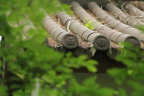 上海植物园仿古建筑的瓦当