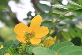 五个花瓣的花