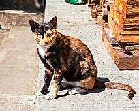 一只坐着的花猫