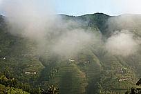 云雾中的六联梯田