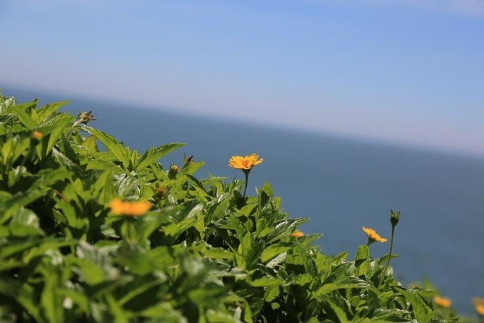 海岸边草丛中突起的一朵花