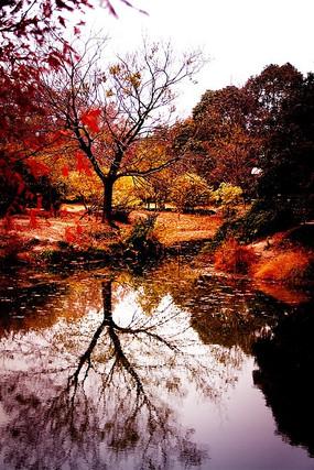 秋天树木对称水中倒影
