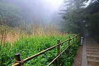 山路边梦幻的绿草