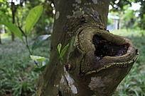 树木上长出来的小树枝