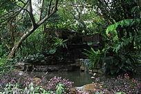 植物园小湖泊