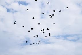 天空中飞翔的鸟